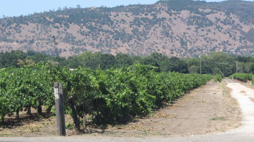 California' Vineyards