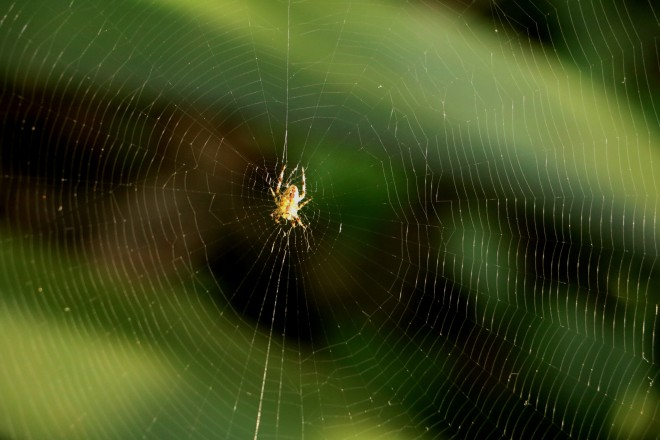 IMG_4667 aranha